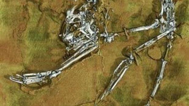 Fósil del esqueleto del primate más antiguo