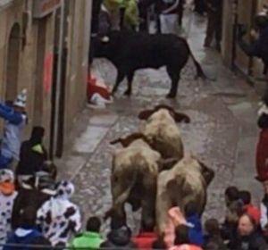 Un toro cornea a un joven en un acto de los Carnavales de Ciudad Rodrigo