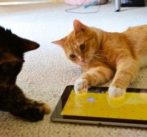 Entre tanta foto de gatito se te puede perder la información importante