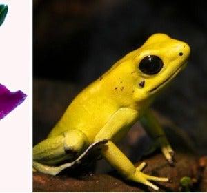 Patrones de color en la naturaleza causados por pigmentos y sirviendo a distintos propósitos