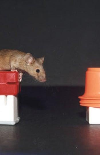 Super ratón Doogie