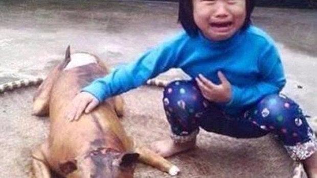 La pequeña junto a su perro cocinado