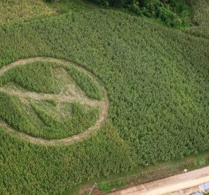 Protesta contra Monsanto