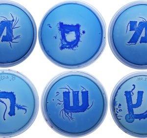 Las letras del alfabeto griego, formadas por bacterias