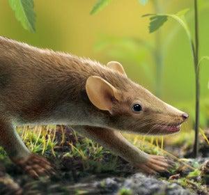 El pelo no evolucionó gradualmente en los mamíferos