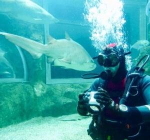 David Bisbal, entre tiburones
