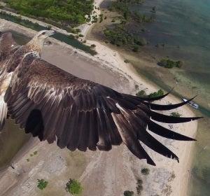 Vista aérea de un pájaro