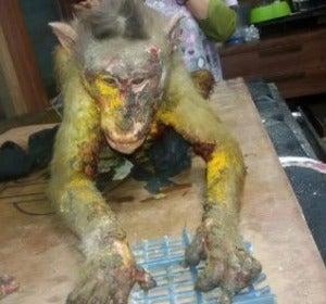Mono con quemaduras de ácido