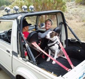 Perro con cinturón de seguridad