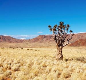 Desierto de Kalahari (Namibia)