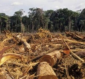Deforestación en Mata Atlántica (Brasil)
