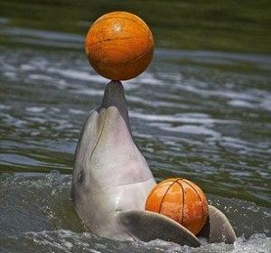El delfín es un experto en baloncesto