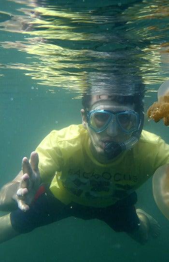 Buceando entre medusas