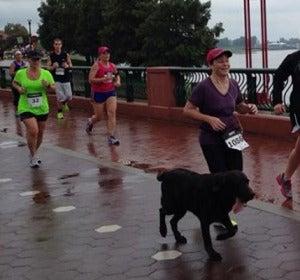 Boogie corriendo la maratón