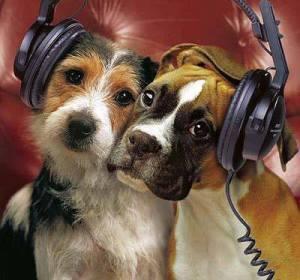 Perros escuchando música