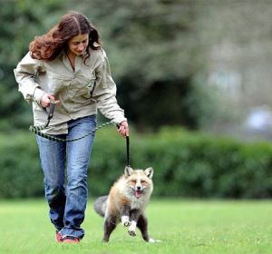 Todd paseando con Emma