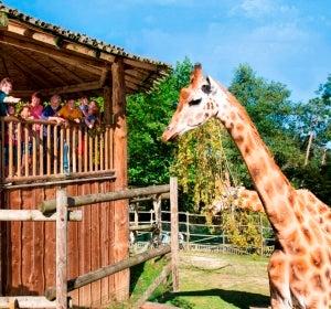 Un paraíso de naturaleza, animales exóticos y vibrantes atracciones