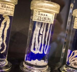 Meguro Parasitological Museum.