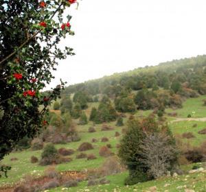Soria, paraíso de las setas en otoño