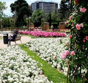 Rosaleda Dr. López Rosat en los Jardines del Real (Valencia)