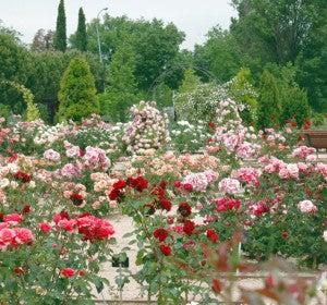 jardín Botánico de la Univ. Alcalá de Henares