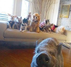 Los animales en el salón
