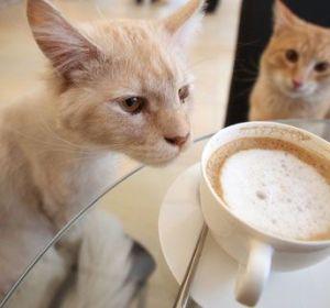 Dos de los gatos del Café Neko, en Viena