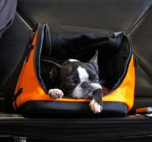 Perro en la sala de espera de un aeropuerto