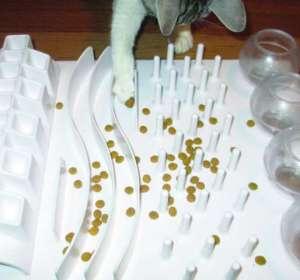 Los rompecabezas con alimentos mejoran el bienestar de los gatos