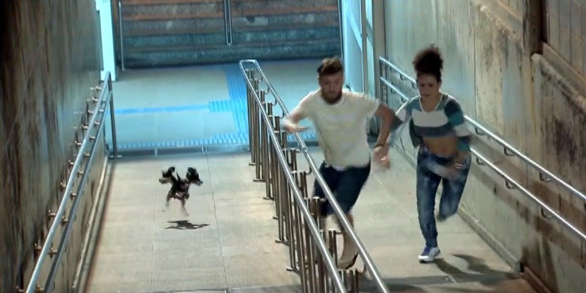 Broma con cámara oculta del perro de tres cabezas