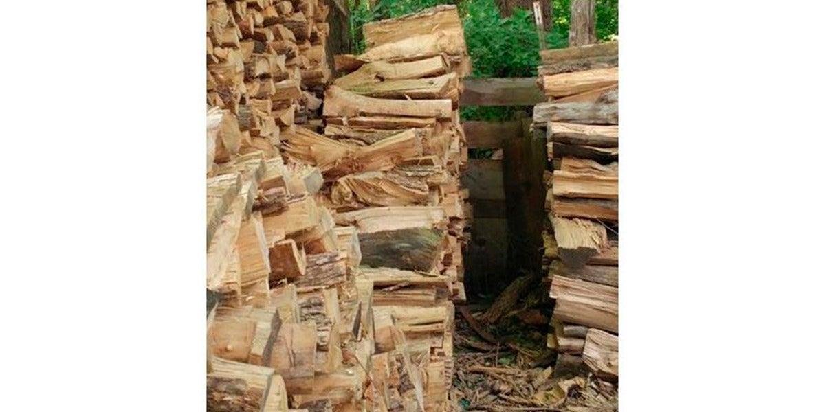 Entre todos estos troncos hay un gato escondido. ¿Eres capaz de verlo?