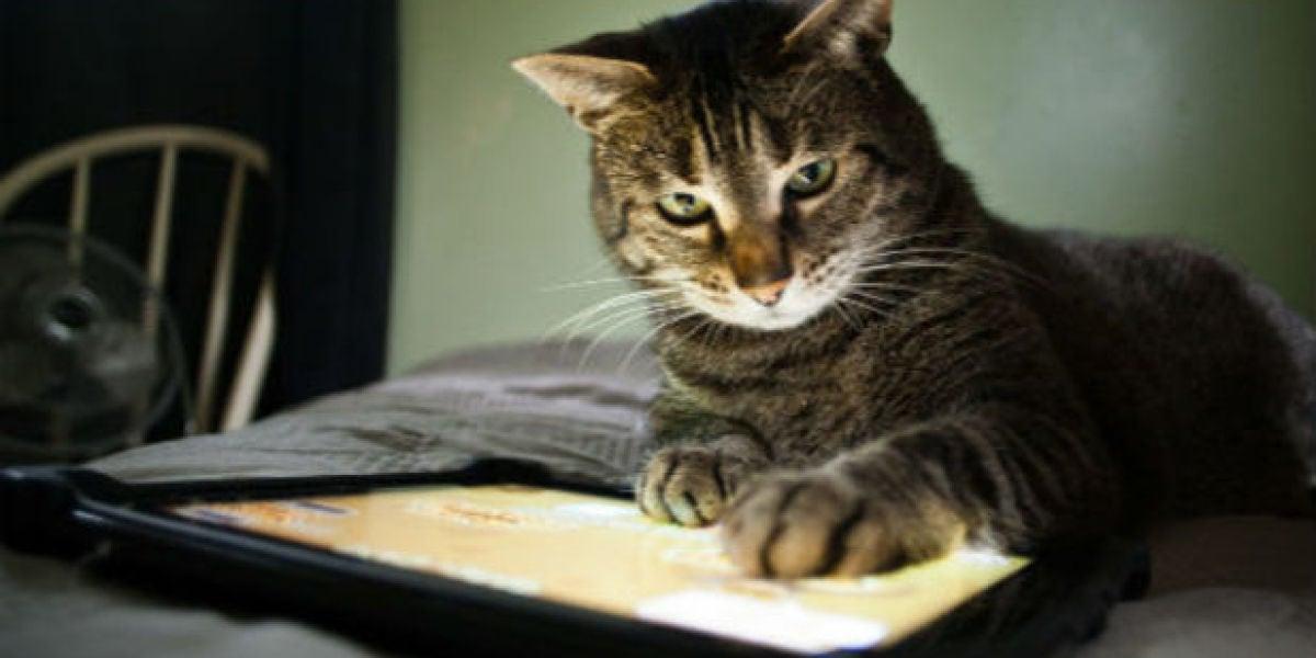 Gato con iPad