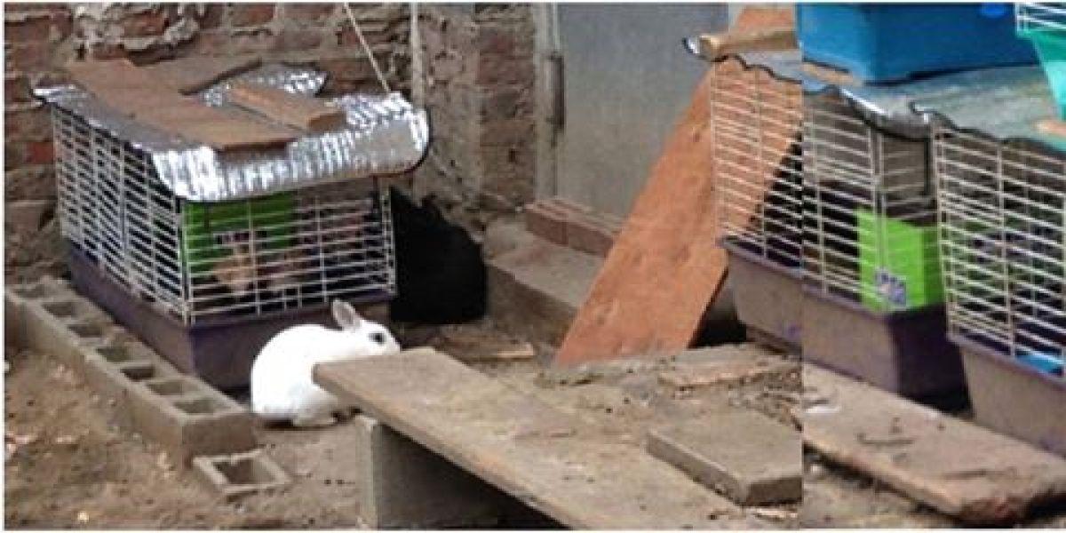 Los conejos de Dorota Trec