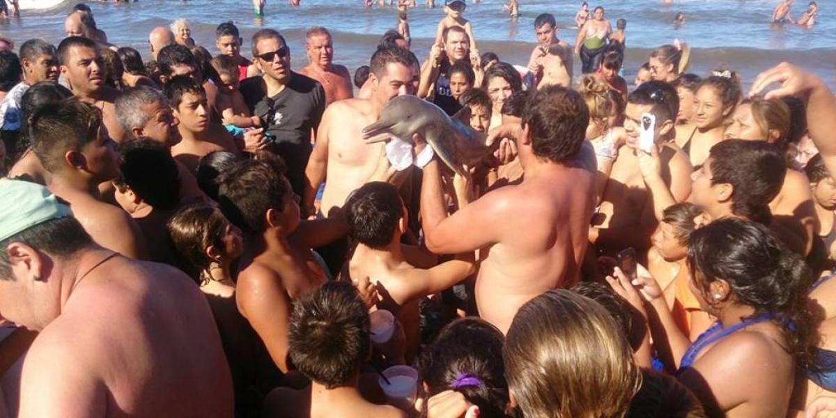 Una multitud intenta hacerse fotos con la cría de delfín