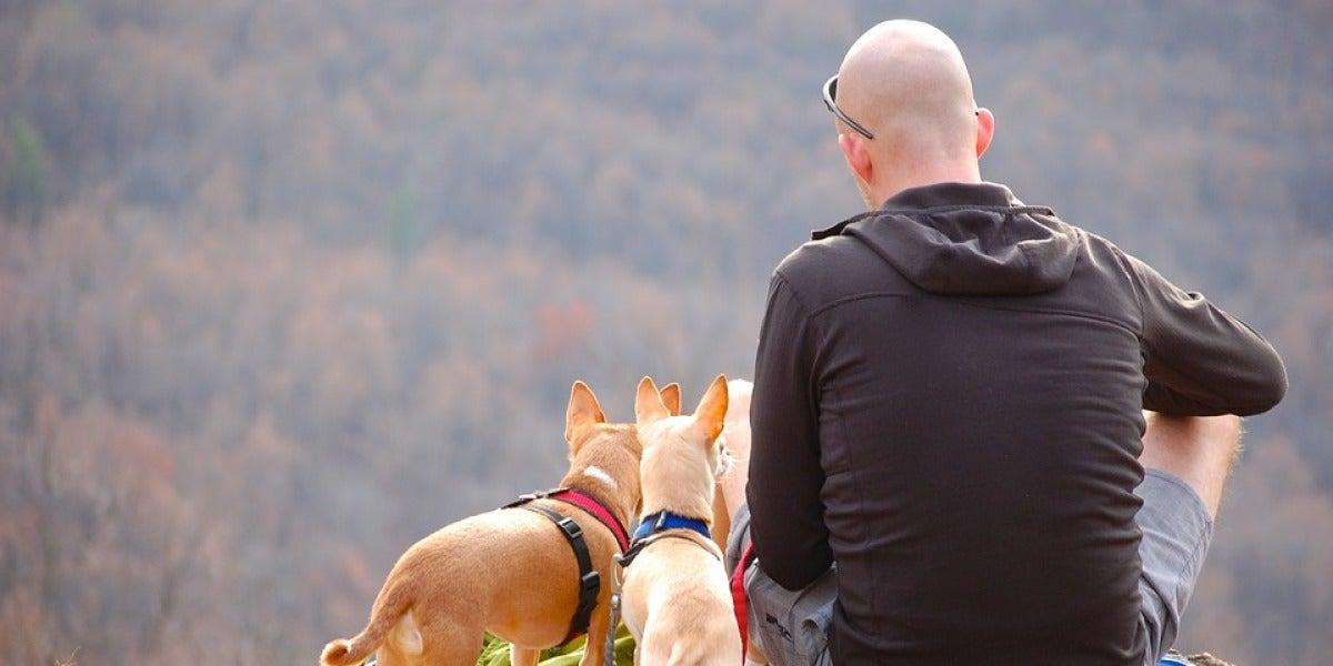 Un hombre hace senderismo con sus perros