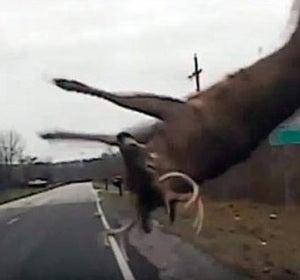 Imagen de archivo de un accidente con un ciervo