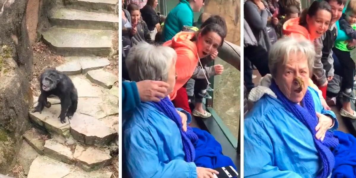 La realidad detrás del vídeo viral del chimpancé que lanzó sus heces y acertó en la cara de una abuela