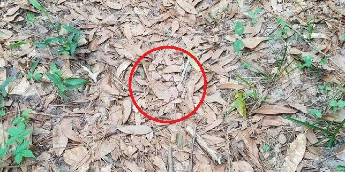Solución serpiente escondida