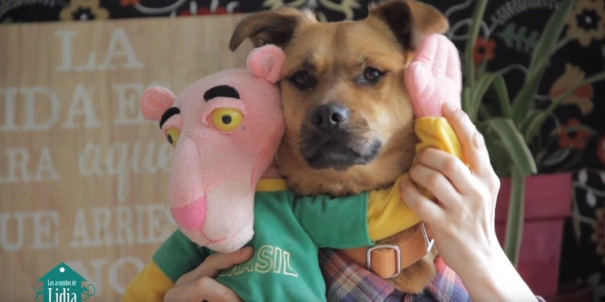 Uno de los perros que protagonizan 'Tu perrito', basado en la popular 'Despacito', de Luis Fonsi y Daddy Yankee