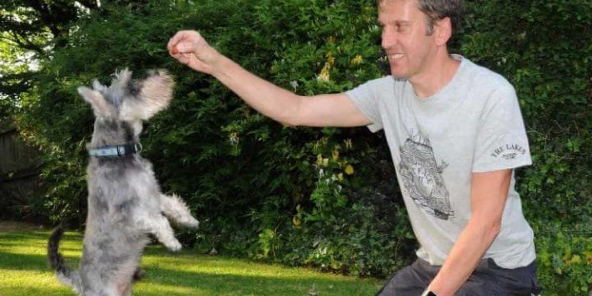 Los perros estuvieron 96 horas desaparecidos y fueron encontrados gracias a unas salchichas