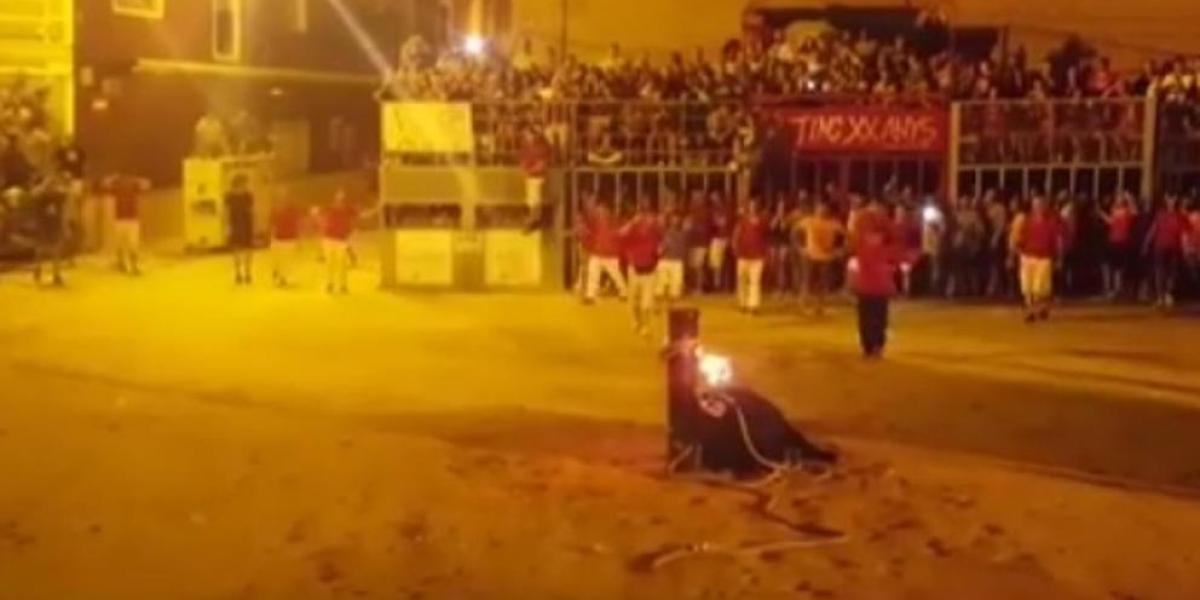 """Polémica por el """"suicidio"""" de un toro en las fiestas del """"toro embolado"""""""