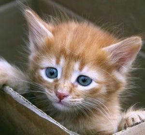 Imagen de archivo de un pequeño gato en una caja de cartón