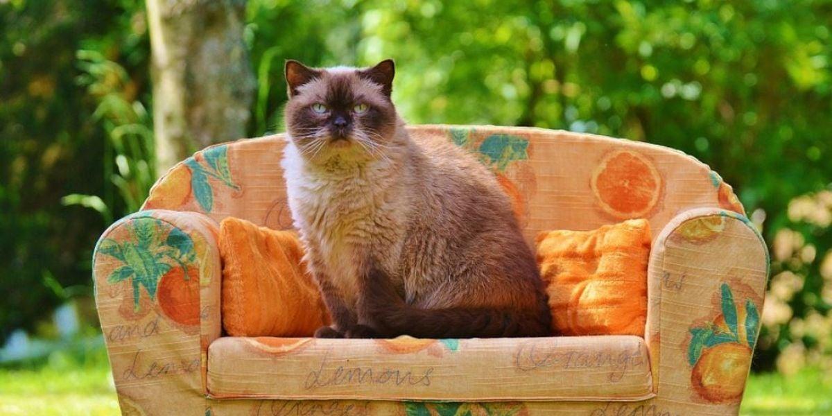 Gato sentado en un sofá