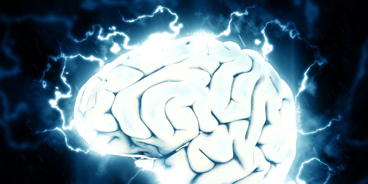 Foto de archivo del cerebro humano
