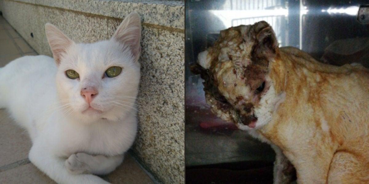 Antes y después de Olaf