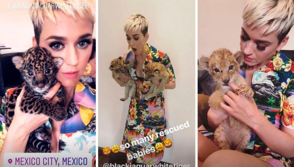 Katy Perry posa con unos felinos cachorros