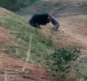 Un oso mata a un taxista en India