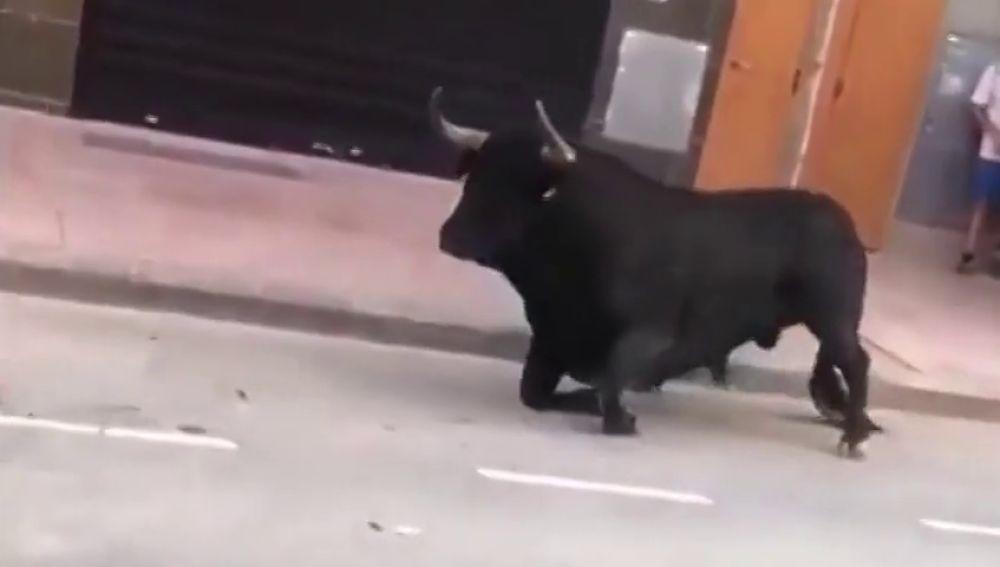 Un toro en los festejos de Vila Real