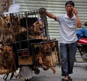 China celebra su festival anual de carne de perro pese a las advertencias de riesgo para salud