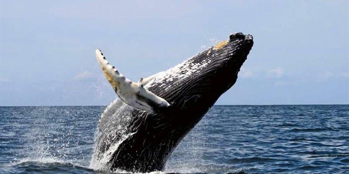 Avistamiento de ballenas en el pacífico (28-06-2018)